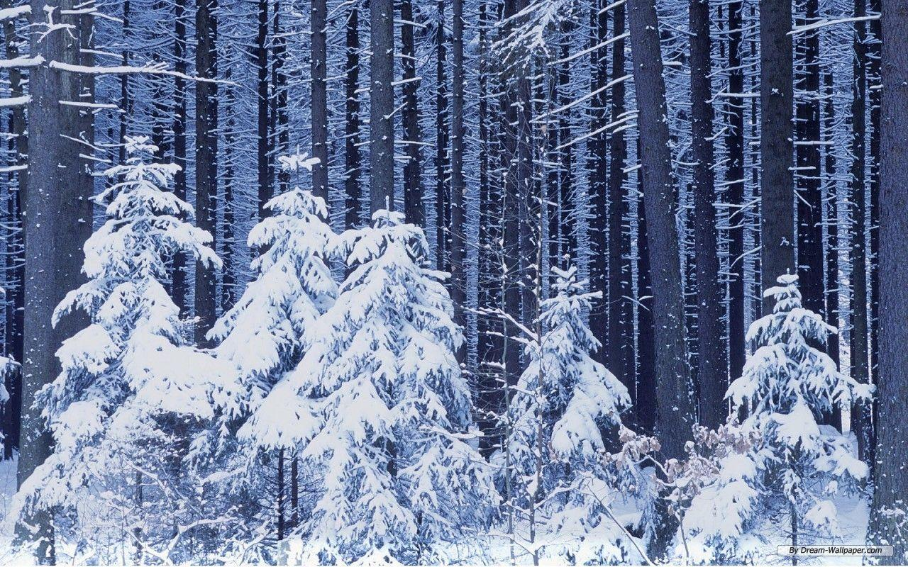 winter wonderland desktop backgrounds wallpaper cave