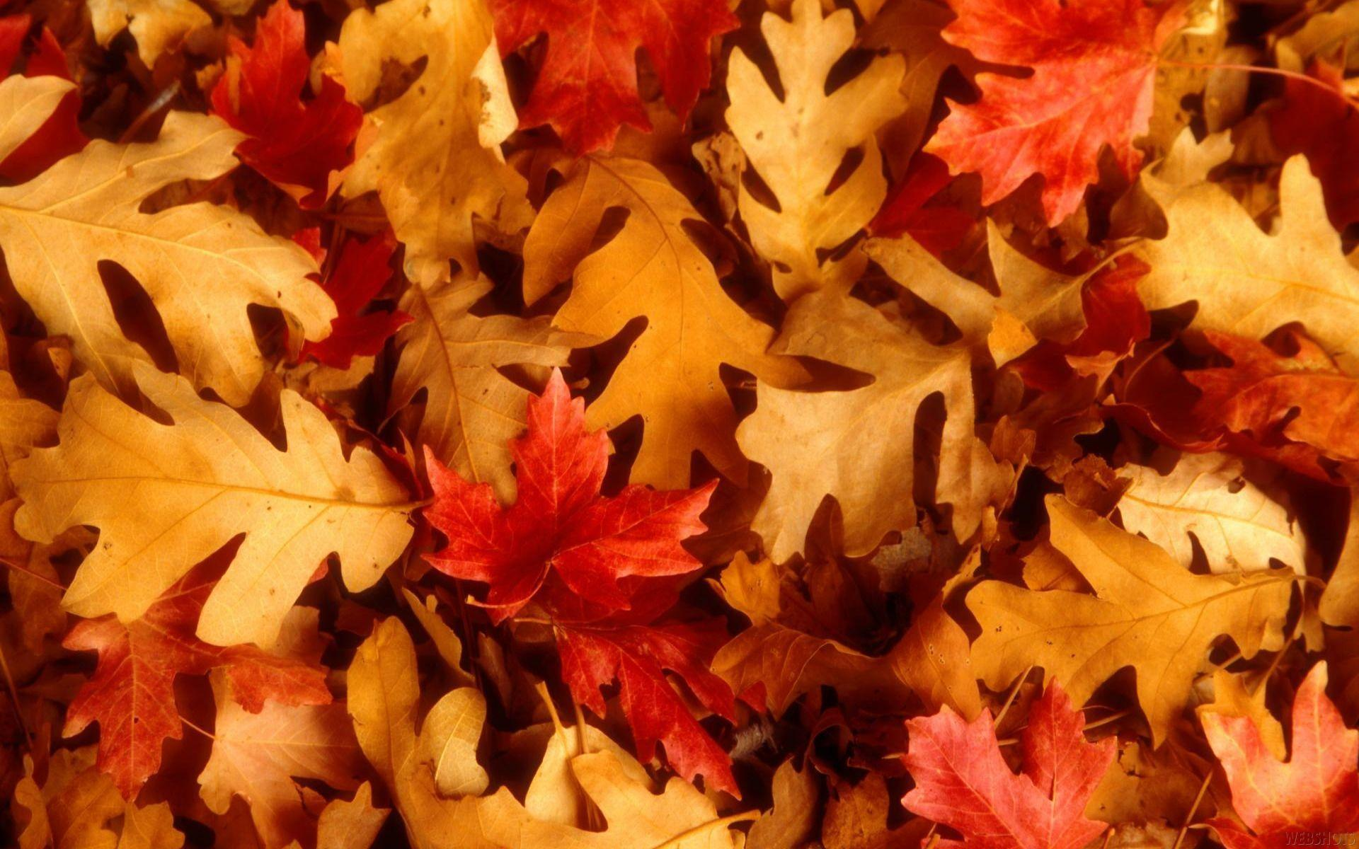 wallpapers for autumn leaves desktop background