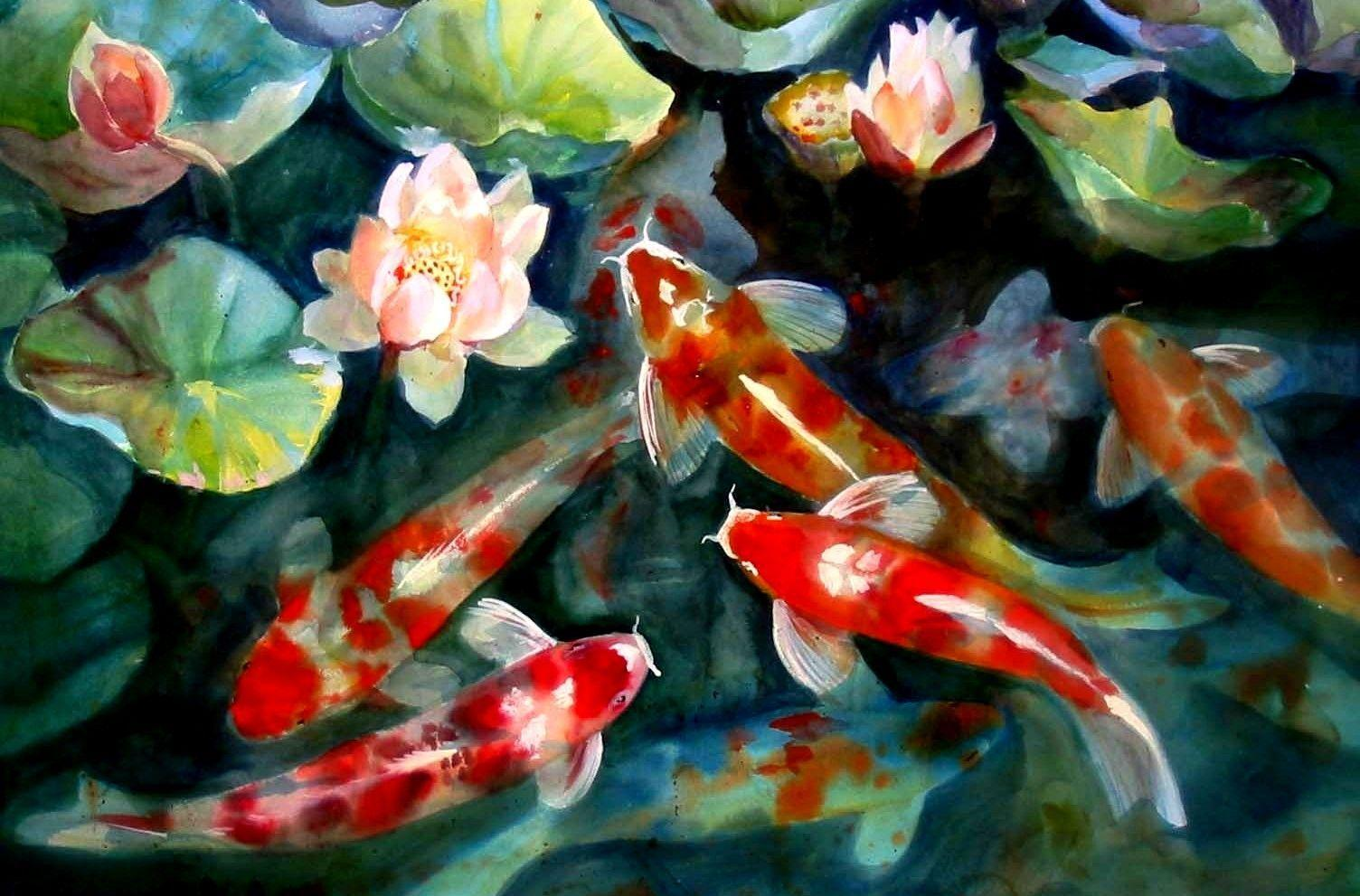 Koi pond wallpapers wallpaper cave for Koi pool cleveleys