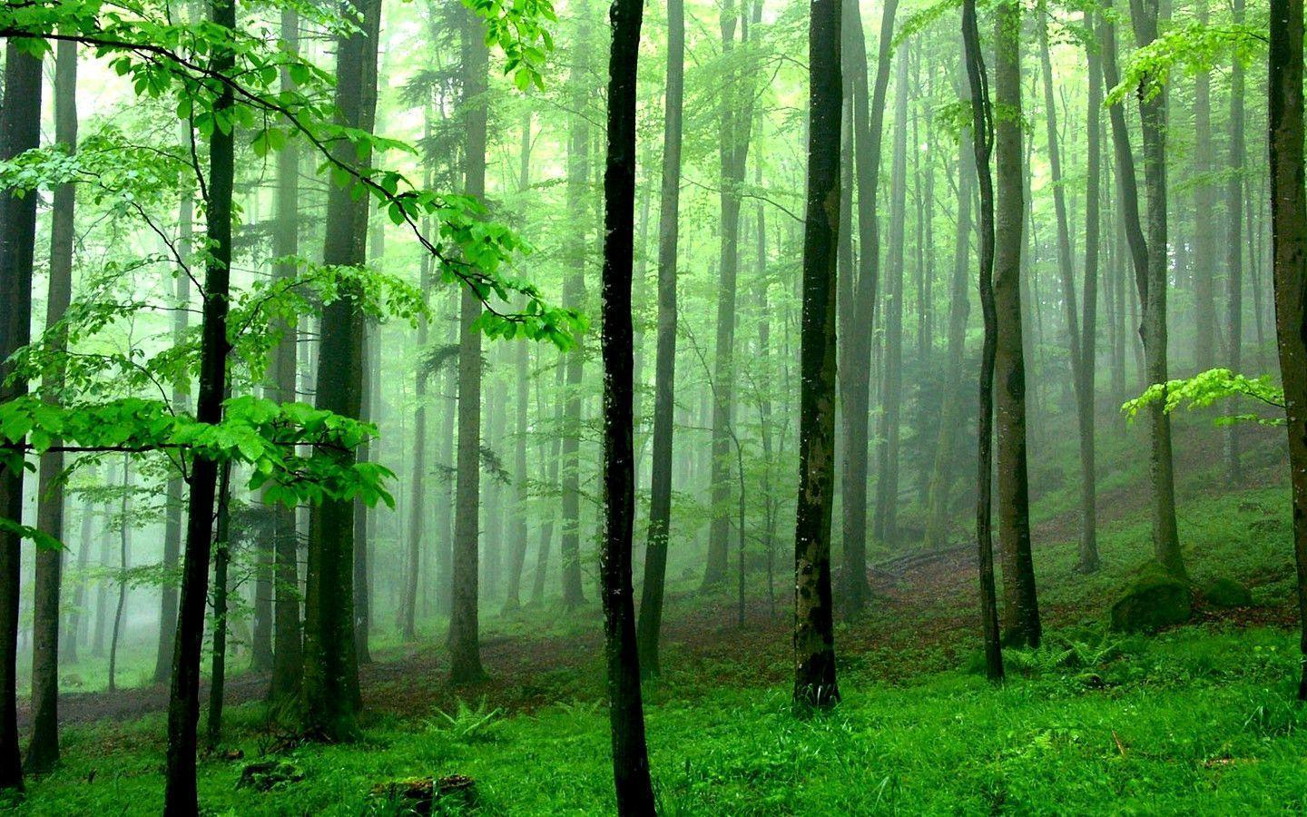 Green Forest Wallpapers Hd Image 3 HD Wallpapers