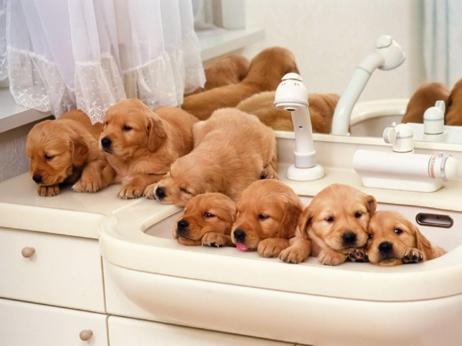 puppies wallpaper for desktop | Funny pictures photos,funny jokes ...