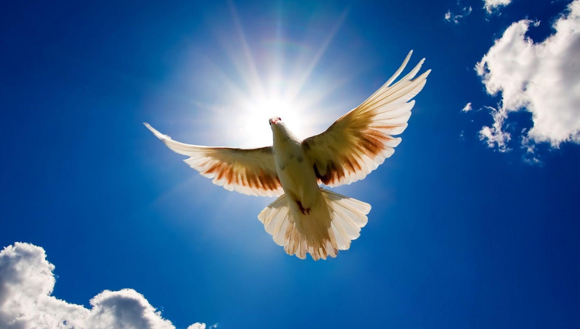 Dove Bird Sky