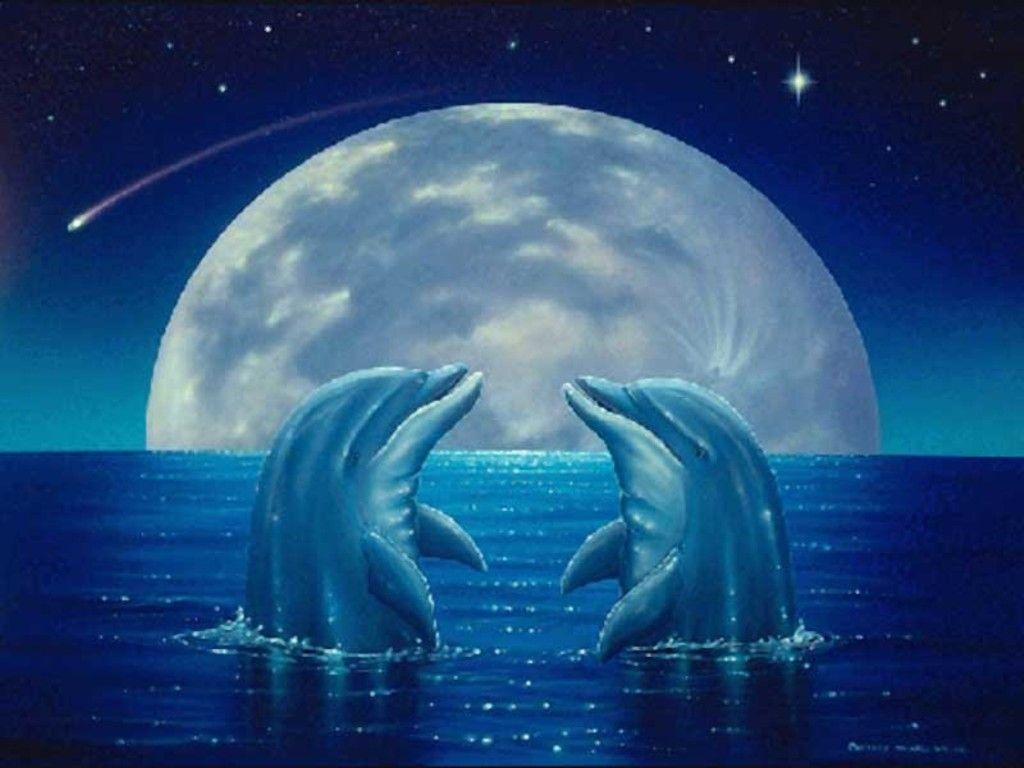 Cute Dolphin Wallpapers - Wallpaper Cave