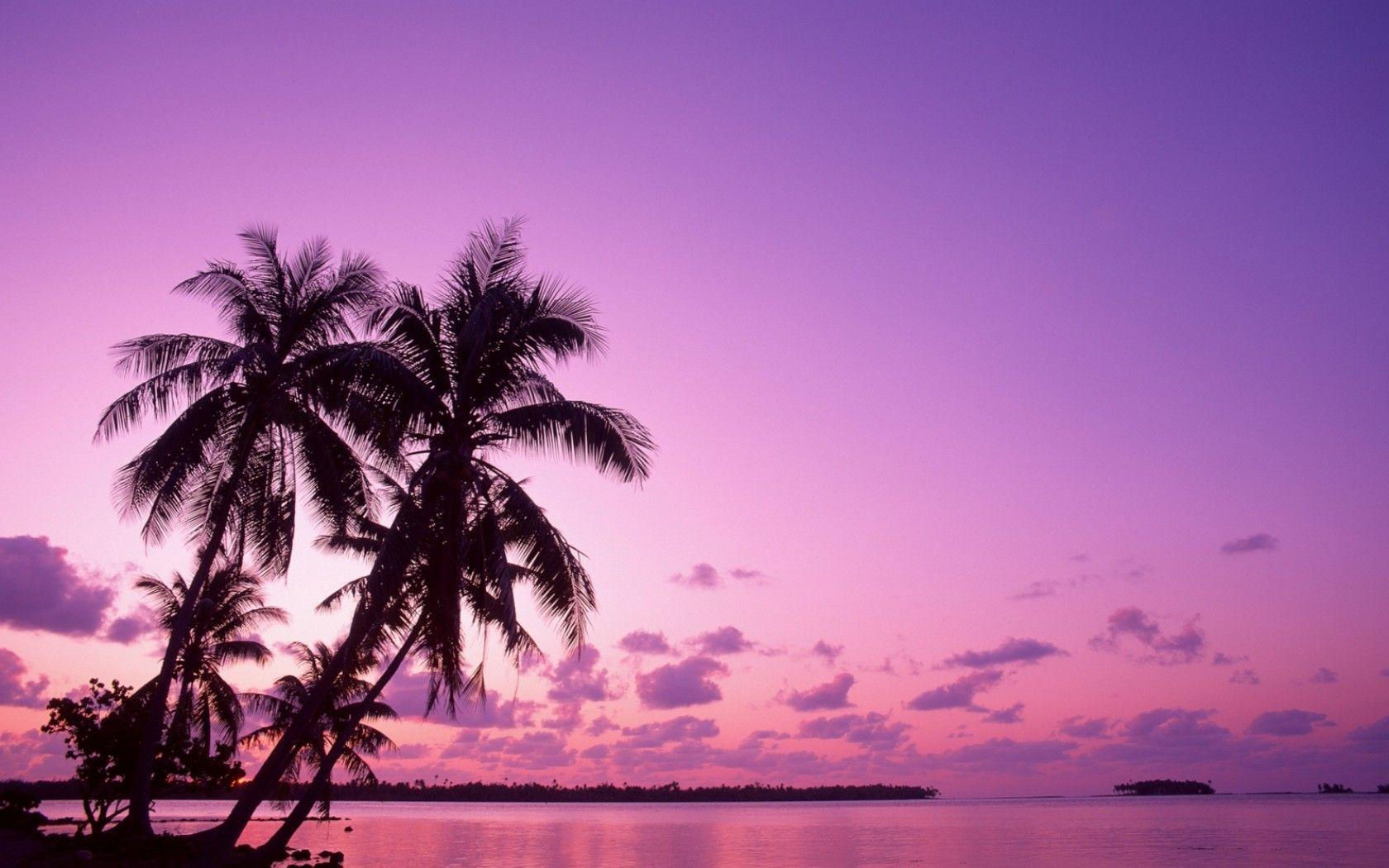 Pink Sunset Backgrounds, wallpaper, Pink Sunset Backgrounds hd ...