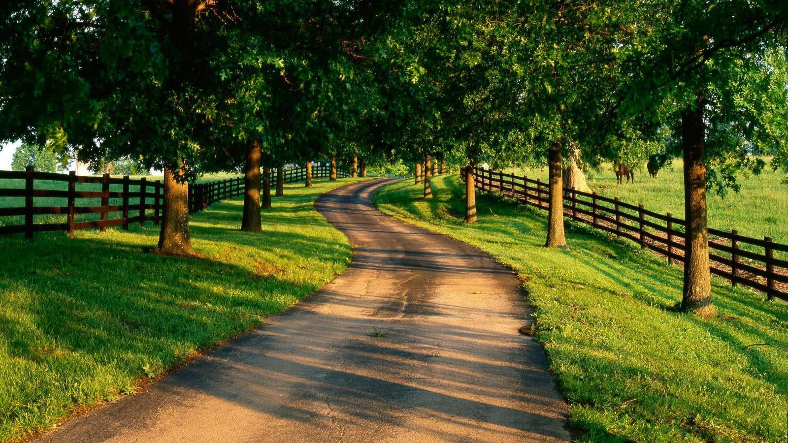 Delightful Summer Country Road Desktop Wallpaper « Desktopia.