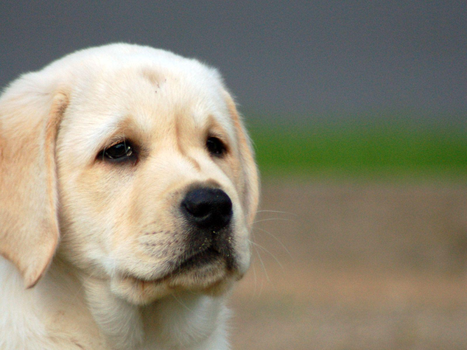 Cute dog looks so sad wallpapers