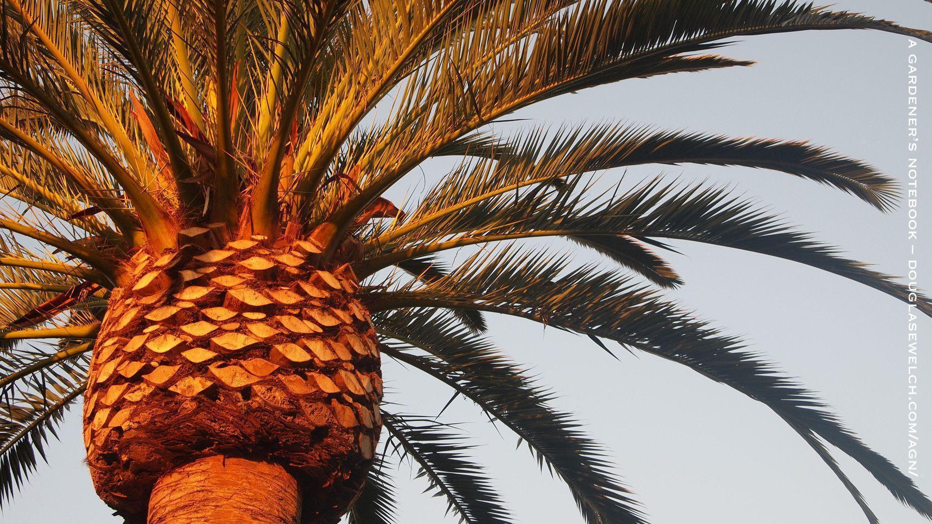 stussy wallpaper palm trees - photo #32