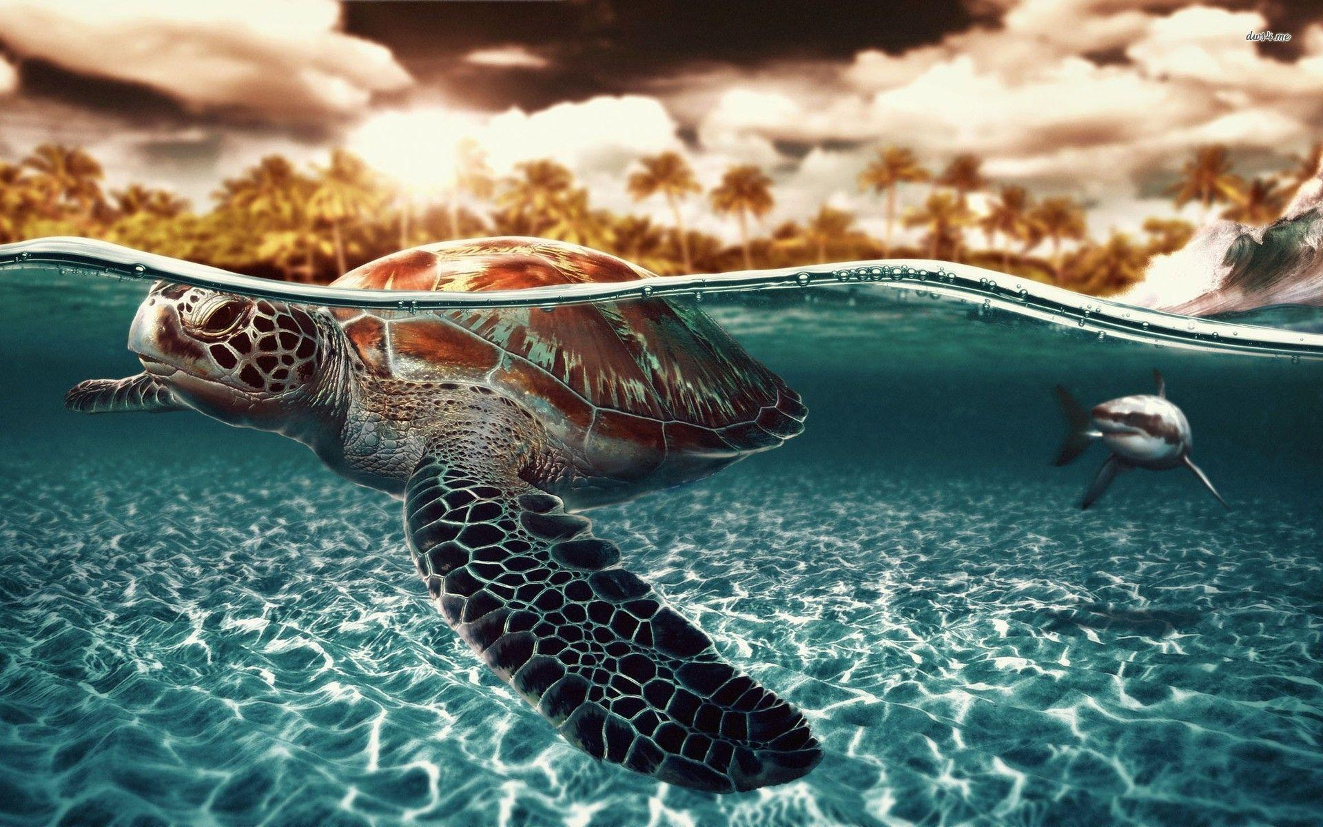 Funny 3d Animal Turtle Wallpapers Hd: Sea Turtles Wallpapers
