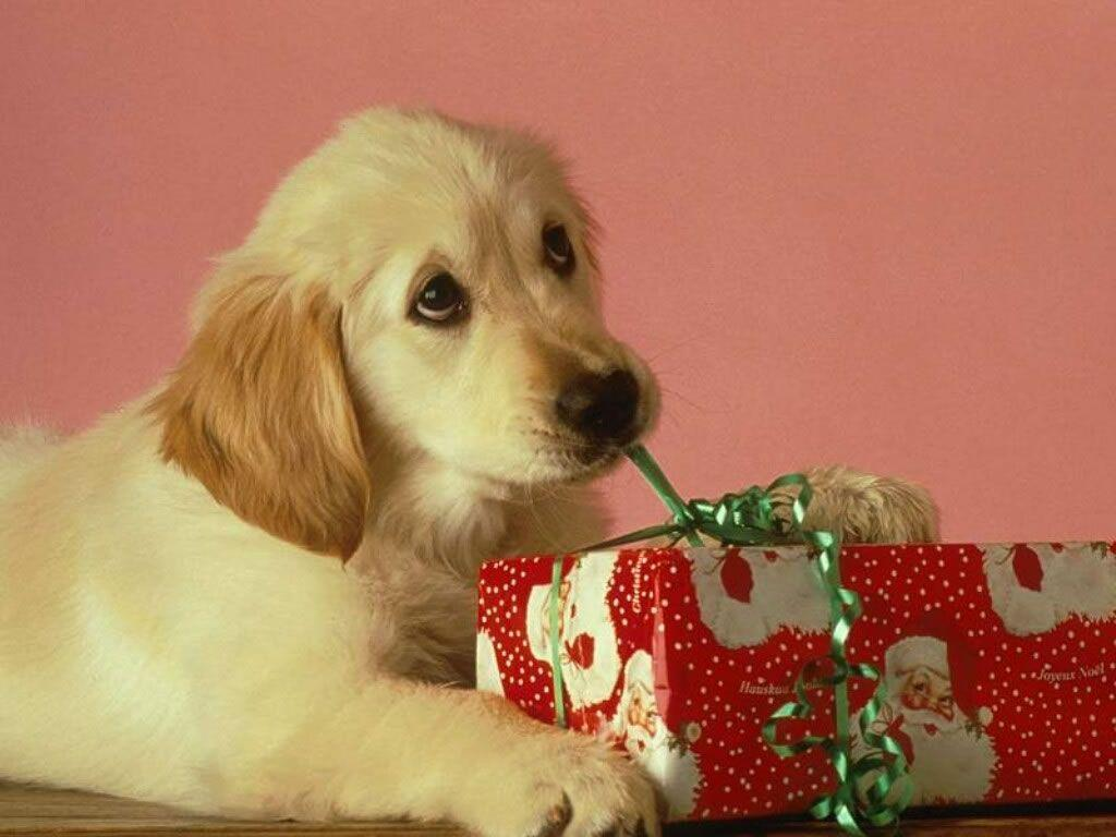 Free Cute Little Christmas Puppy wallpapers Wallpapers