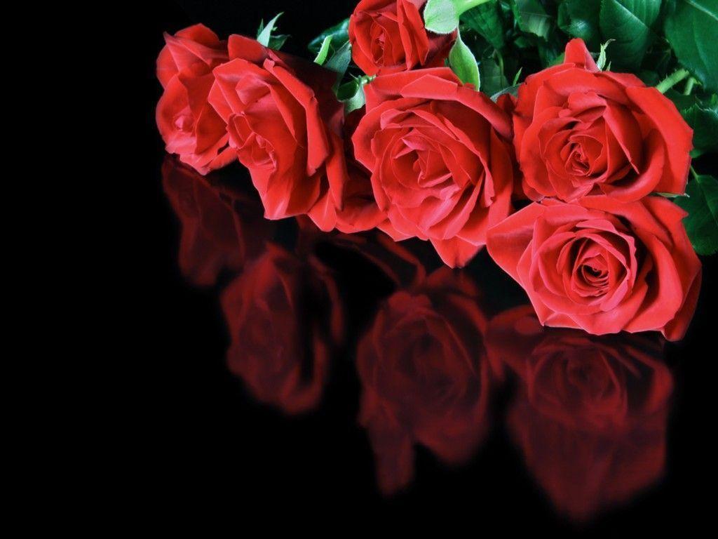 Red Rose On Black Backgrounds