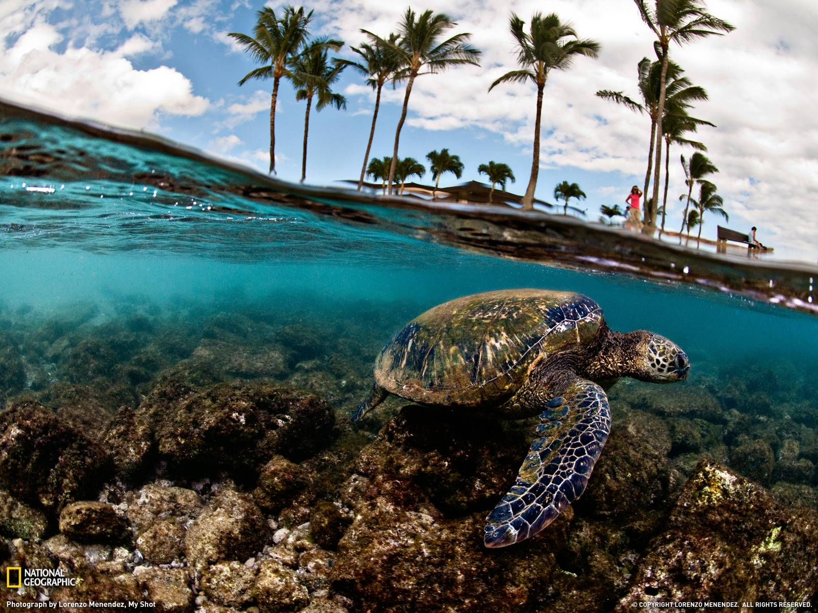 Green Sea Turtle Photo, Hawaii Wallpaper – National Geographic ...