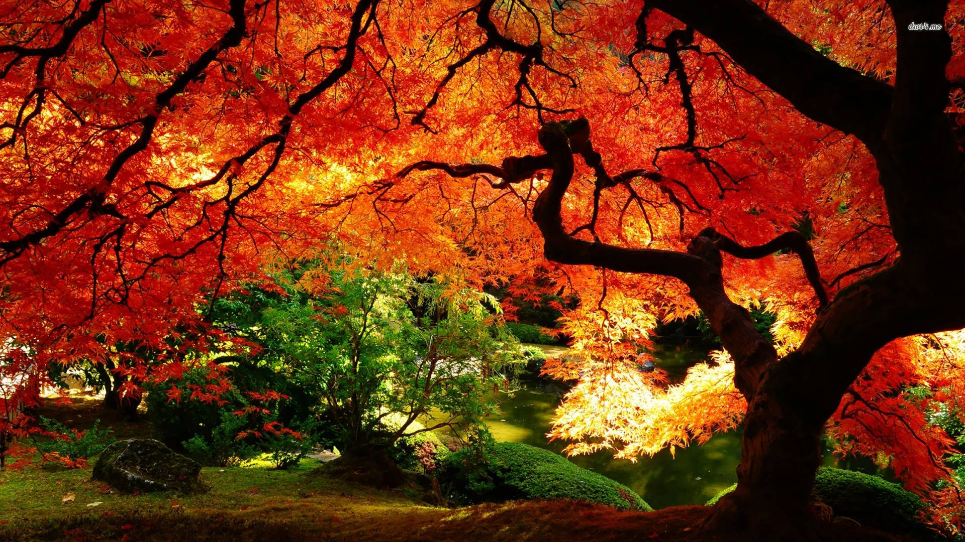 landscape autumn hd wallpaper - photo #17