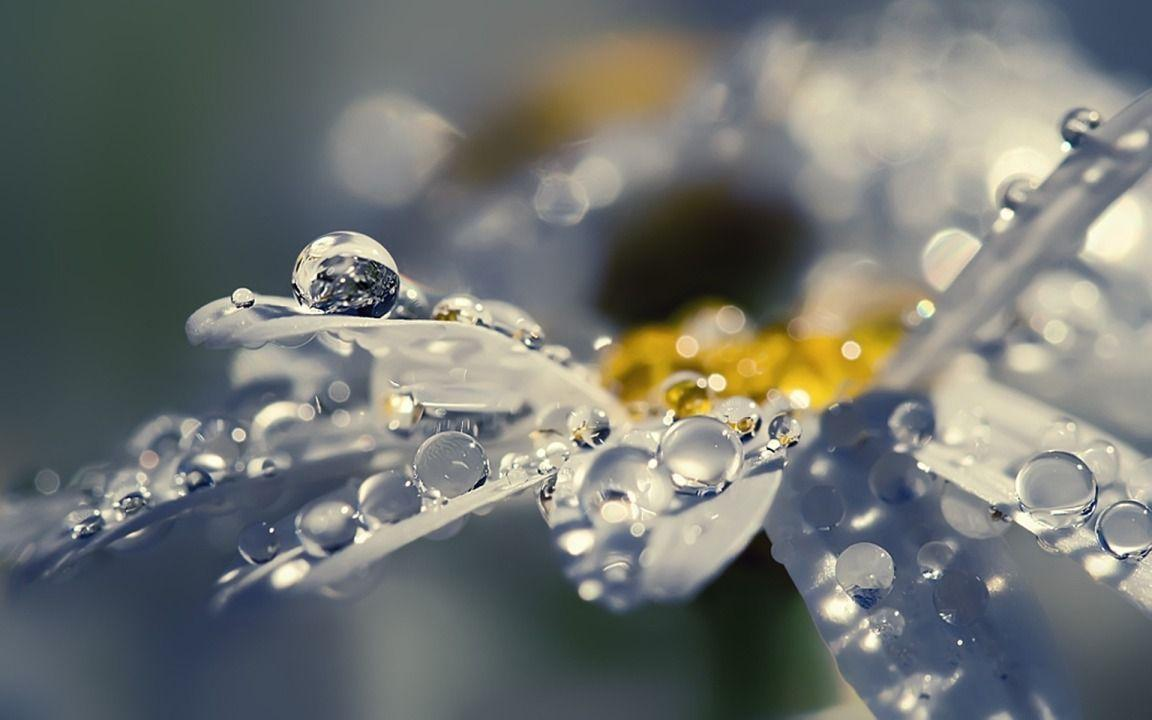 Bubbles of Water on White Daisy widescreen wallpapers