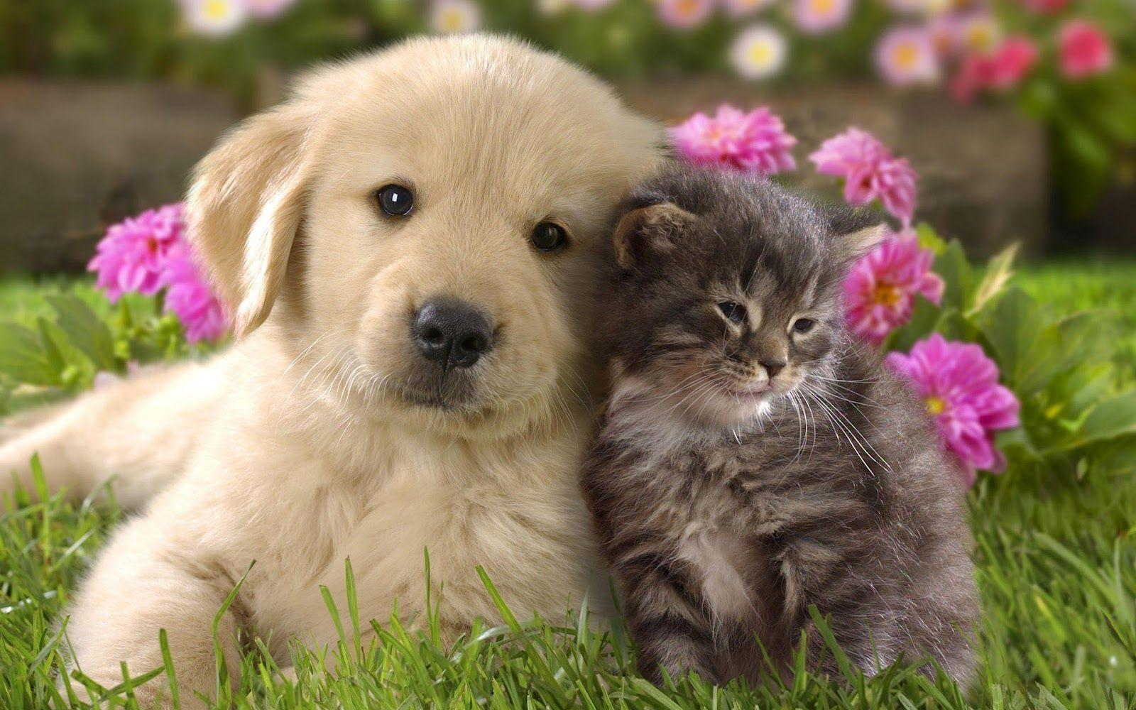 cat And Dog Love Wallpaper : cat And Dog Wallpapers - Wallpaper cave