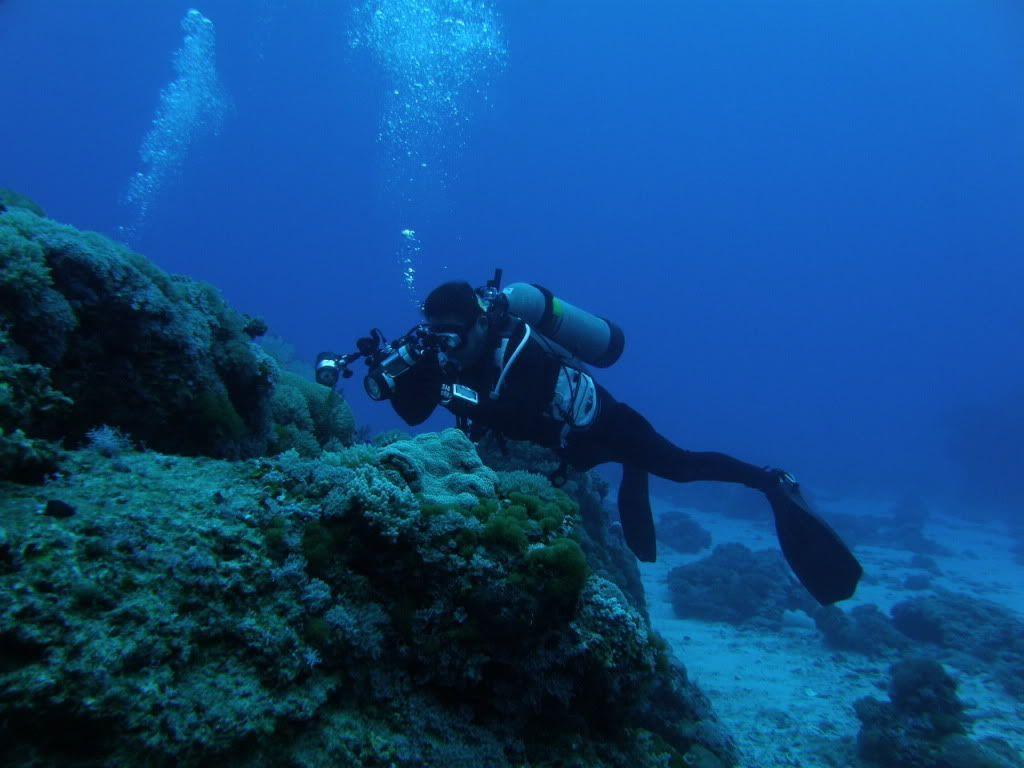 scuba diving wallpaper wallpapers - photo #27