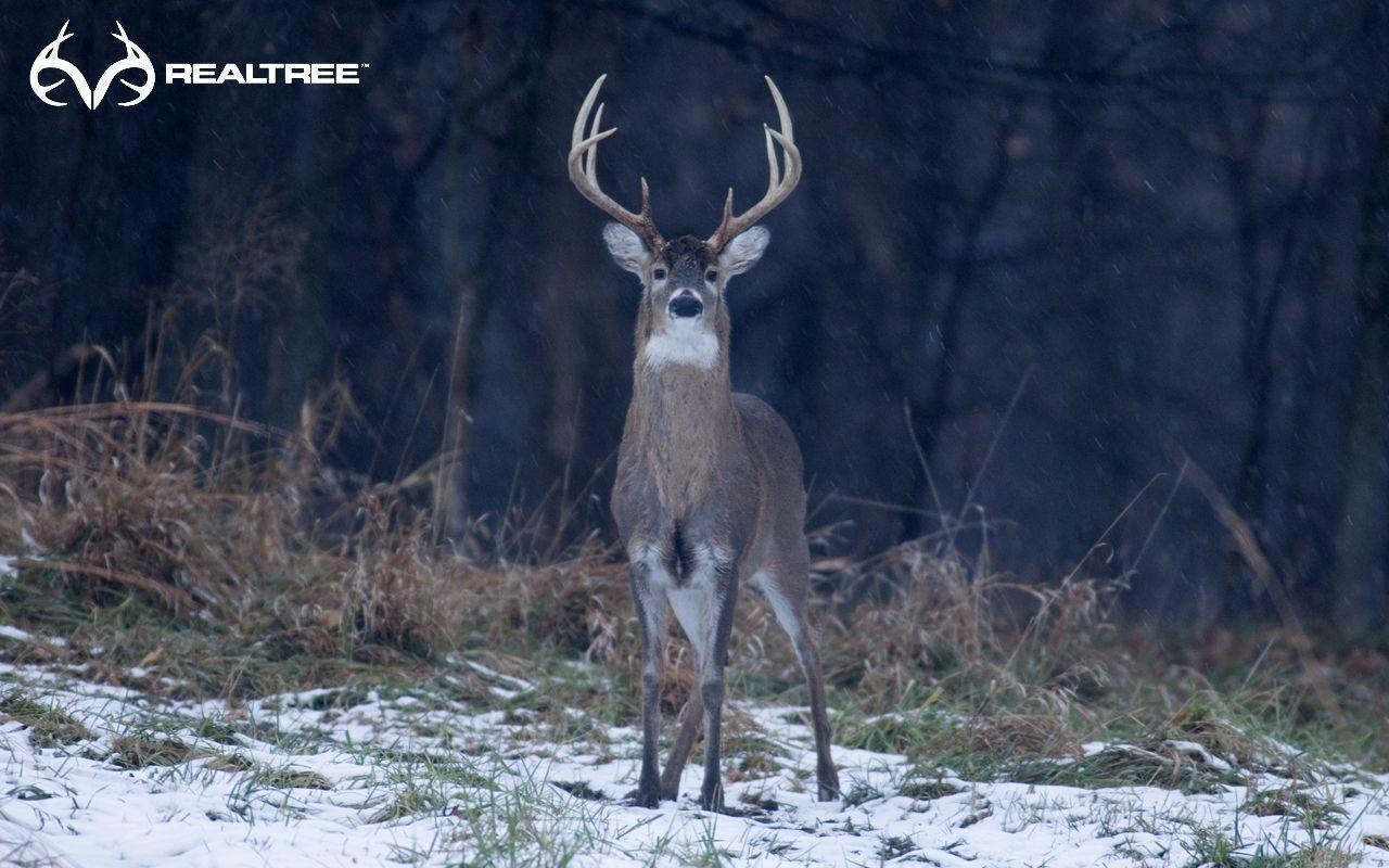 Whitetail Backgrounds