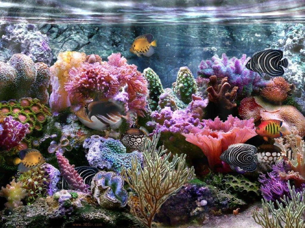 aquarium backgrounds coral - photo #24