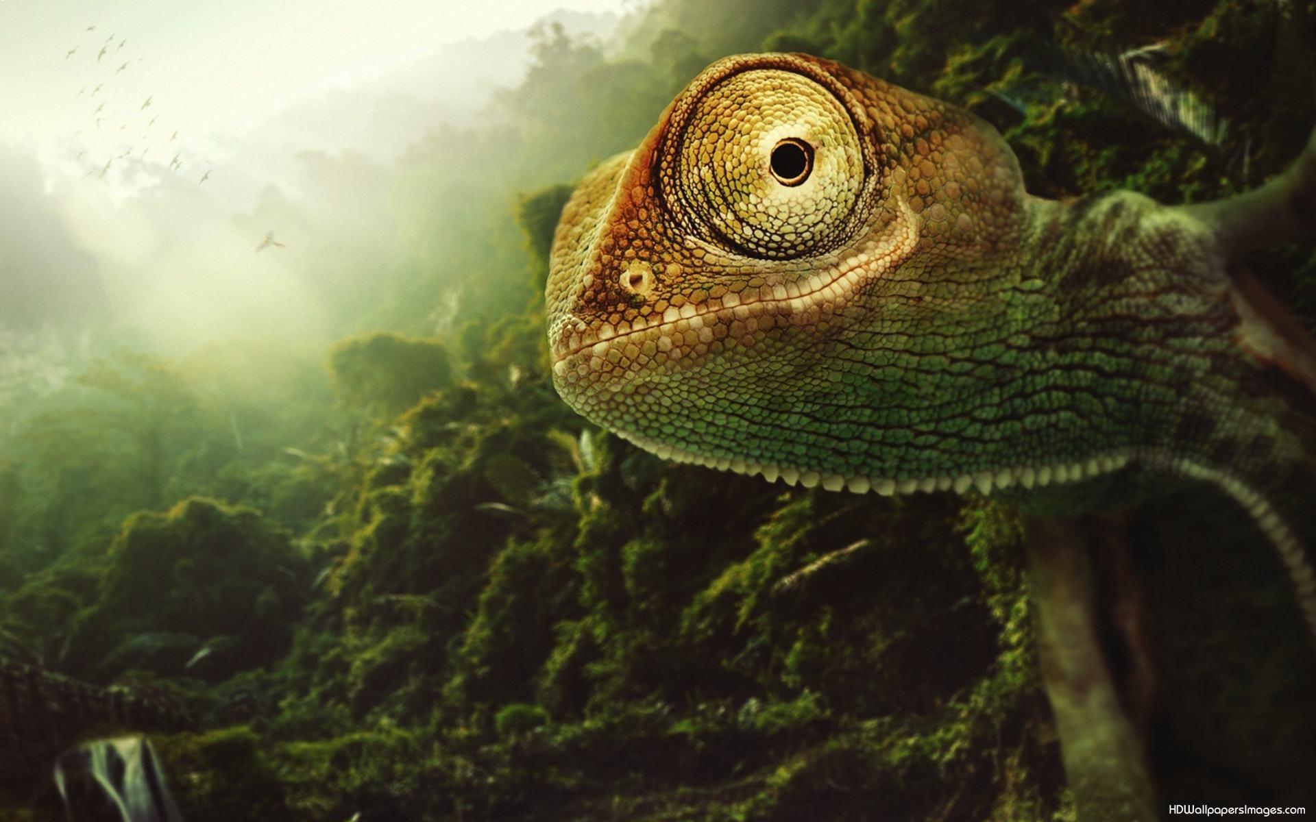 chameleon wallpaper 9661 - photo #16