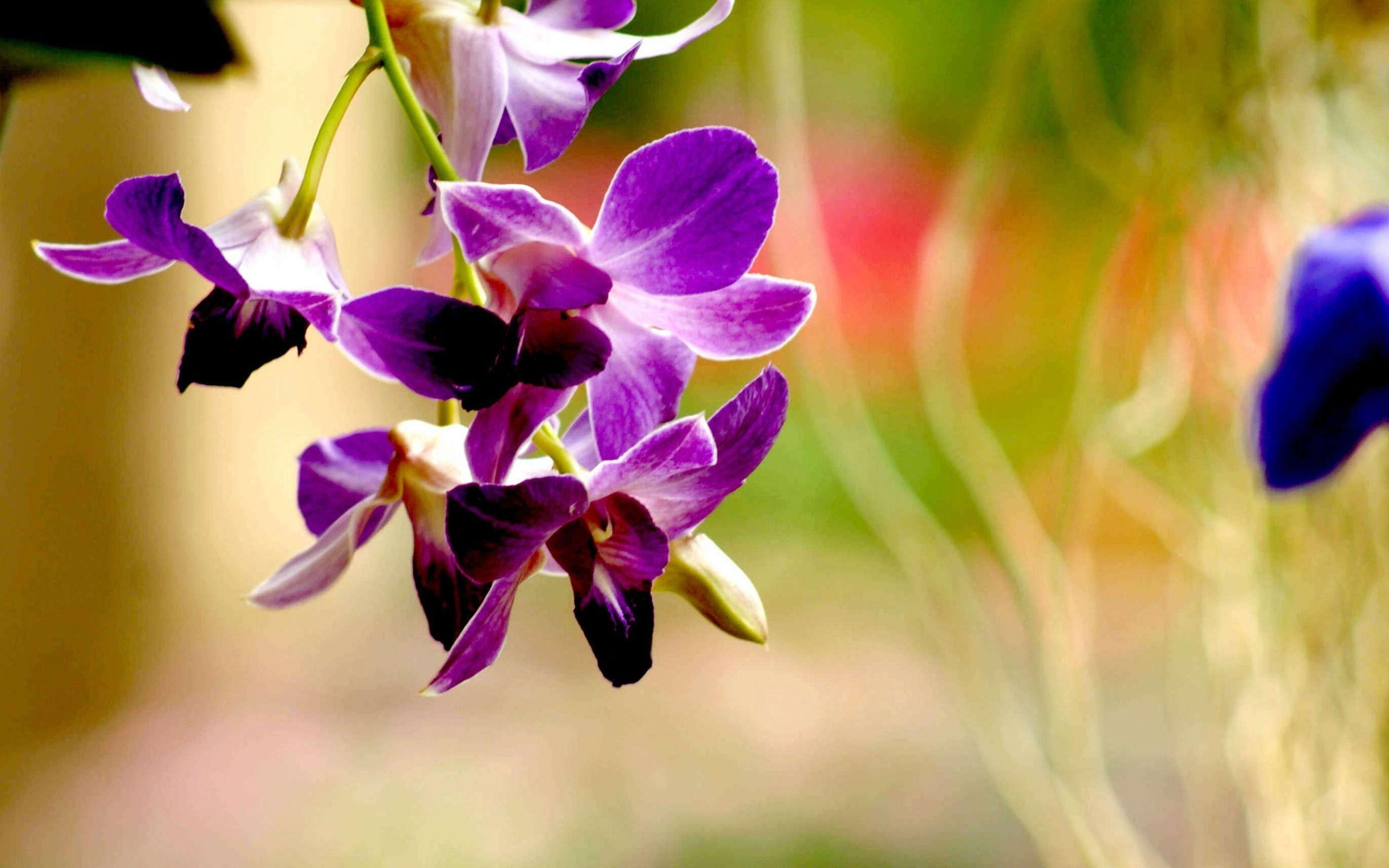 Habrumalas orchids in water wallpaper images - Purple Orchid Wallpapers Wallpaper Cave