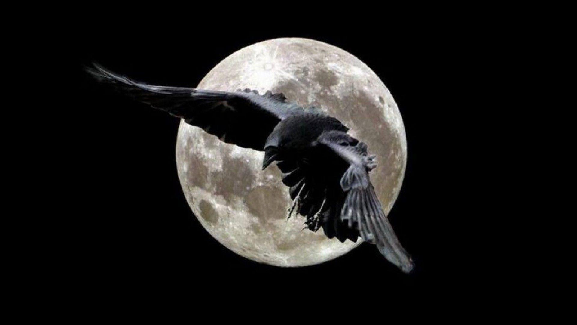 Ravens flying wallpaper - photo#49