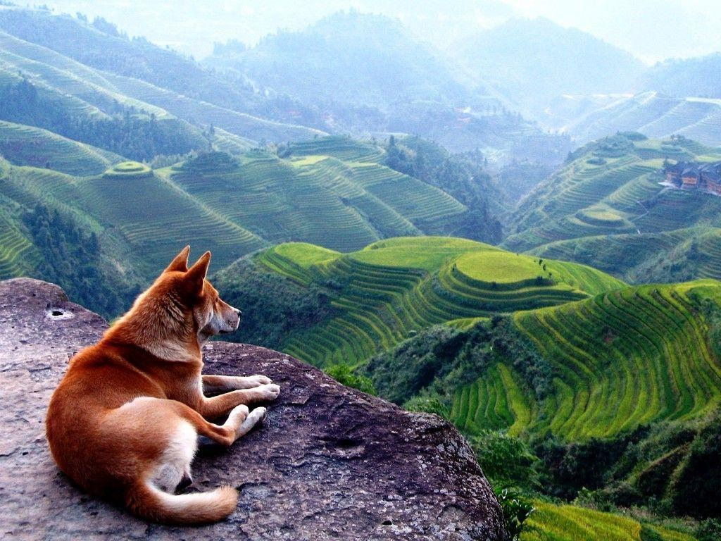 Dog On Beautiful Landscape Picture HD Wallpapers