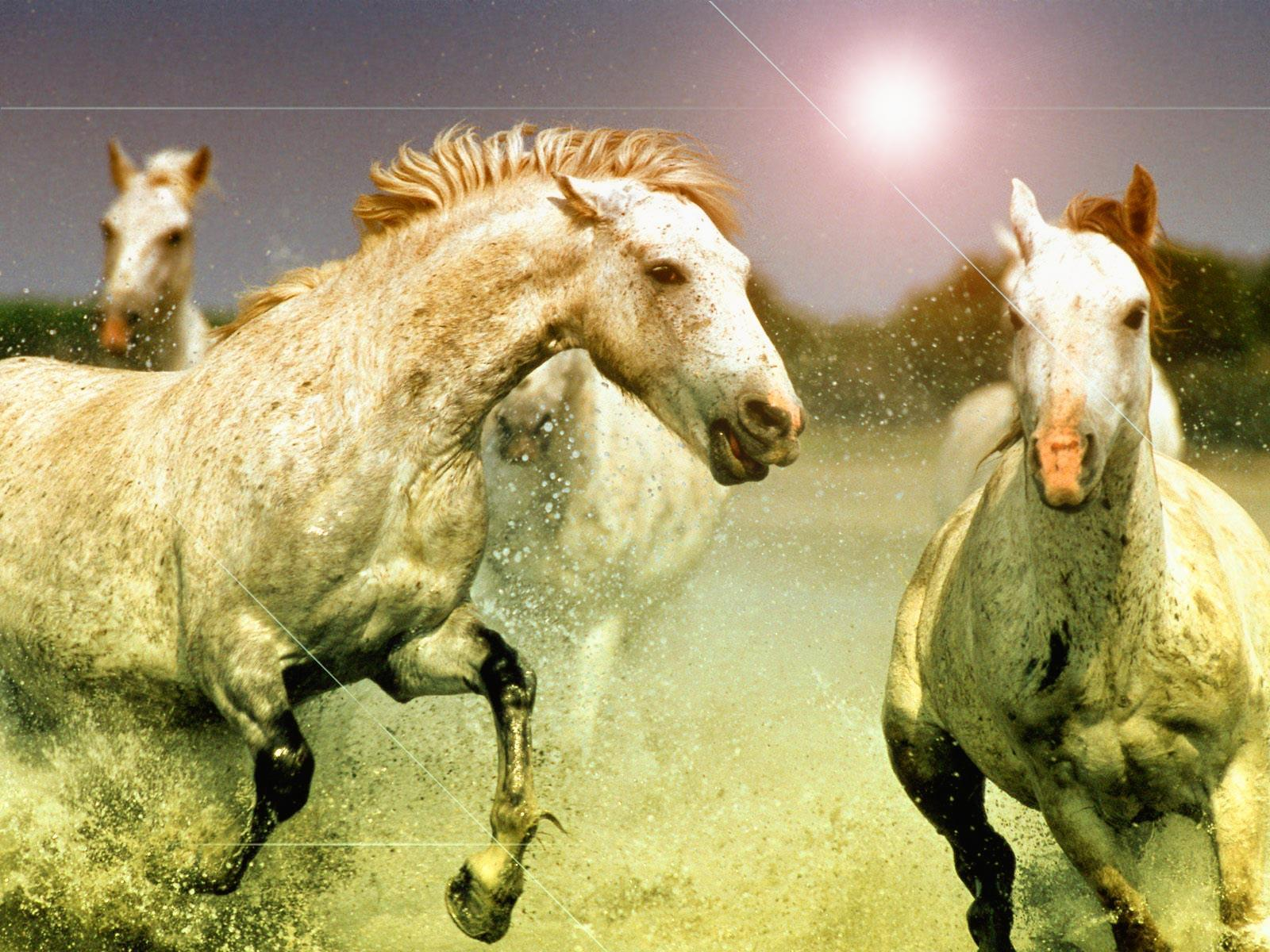horse wallpapers for laptop - photo #29