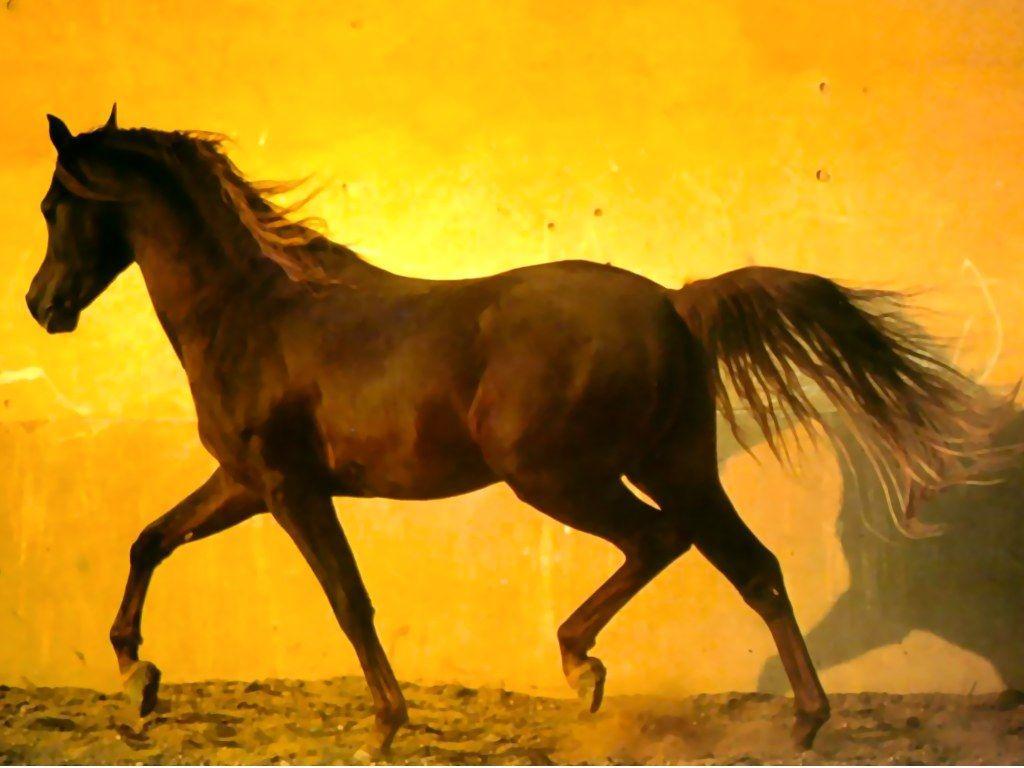 Best Wallpaper Halloween Horse - WUbIylC  Picture_868411.jpg