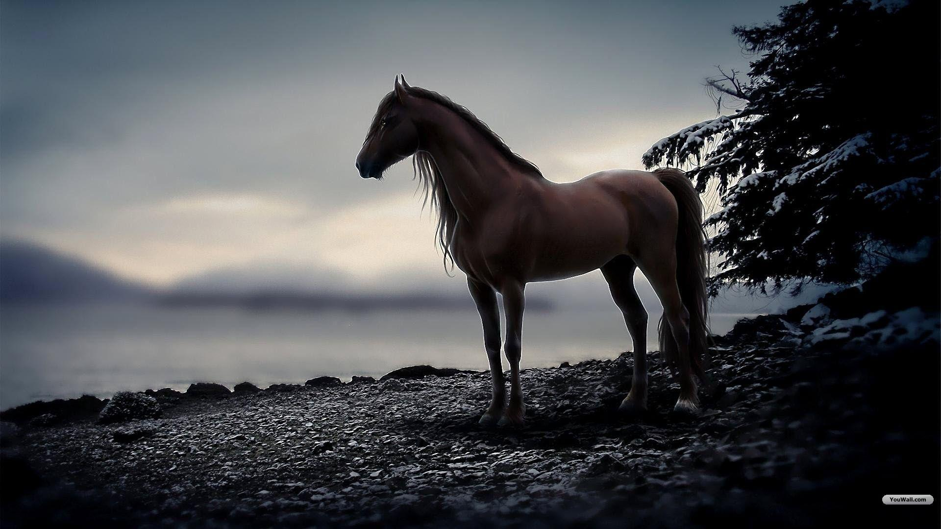 Wallpapers Horse - Wallpaper Cave - photo#47