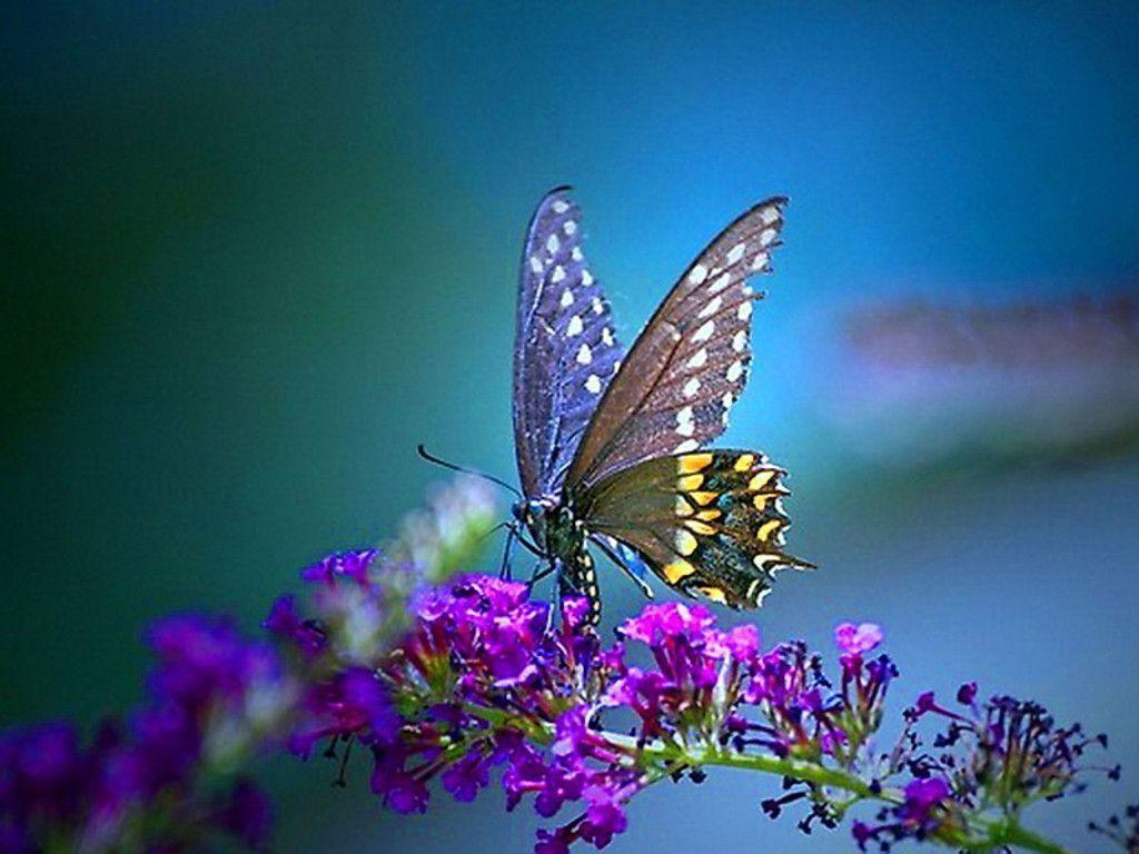 download wallpaper multicolored butterflies - photo #31