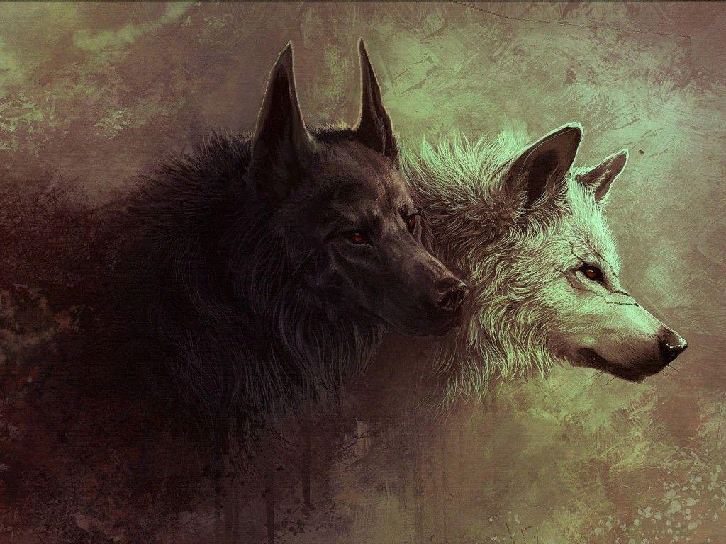 Wallpapers For > White And Black Wolf Wallpapers