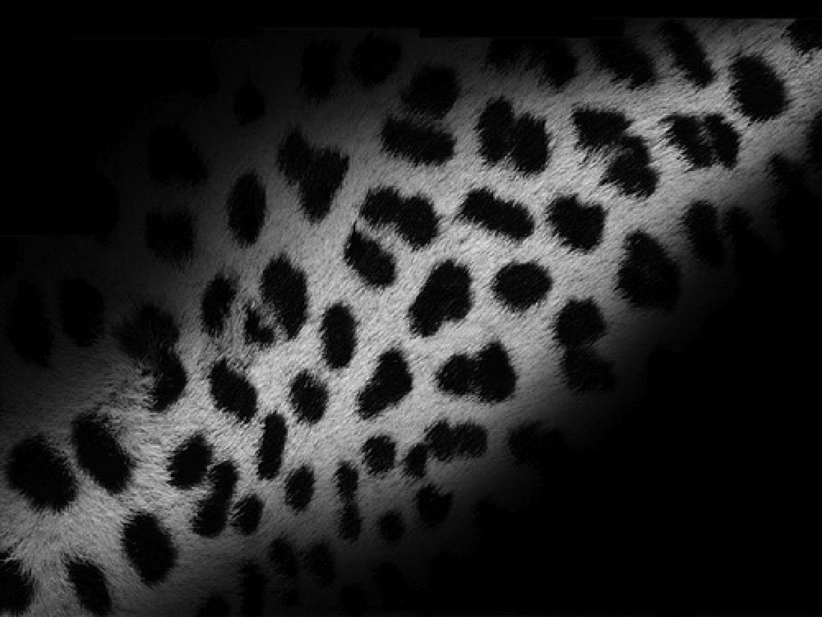 leopard wallpapers wallpaper cave