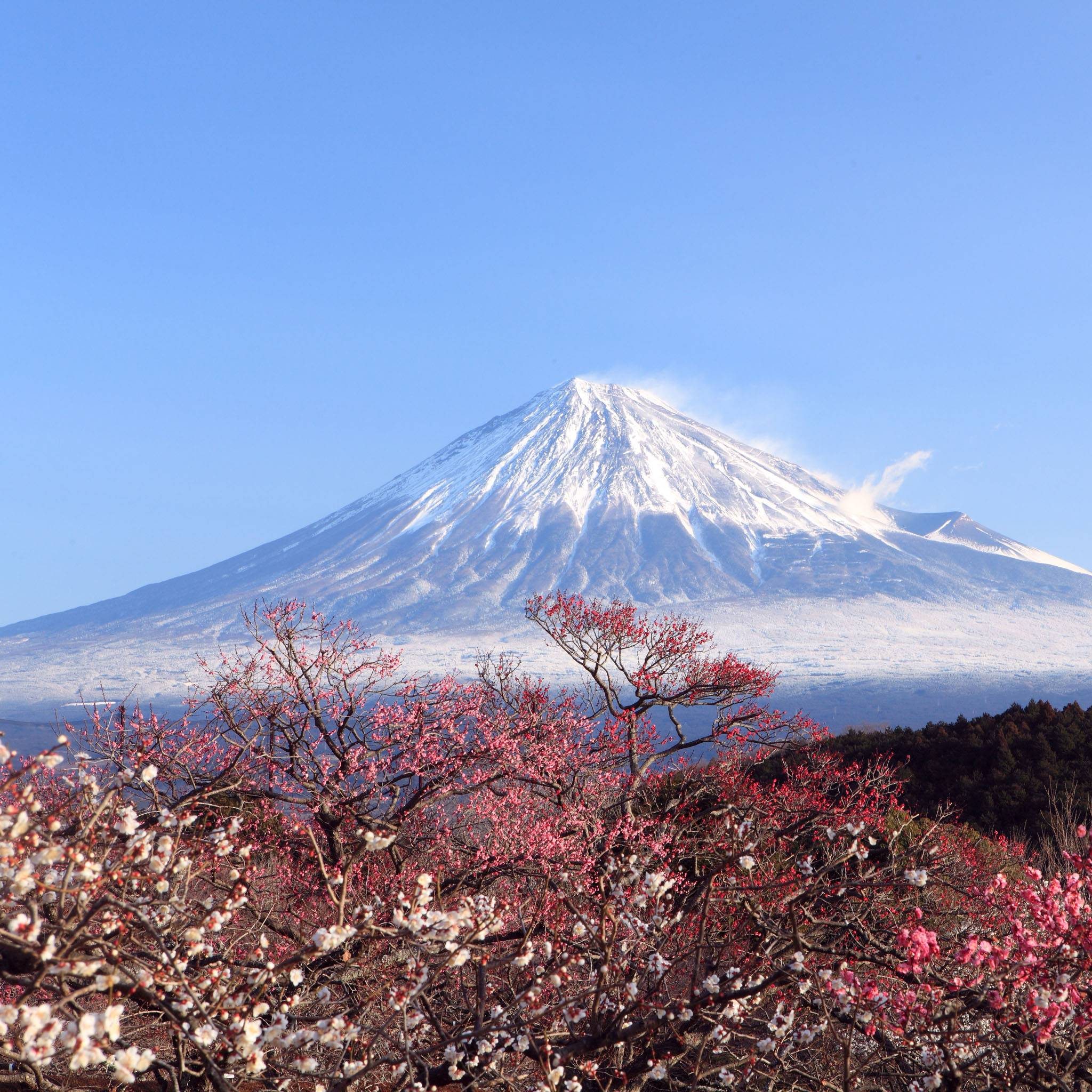 Strawberries, Shibas, Fuji-San, and the Nicest Highway Rest Stop in The World