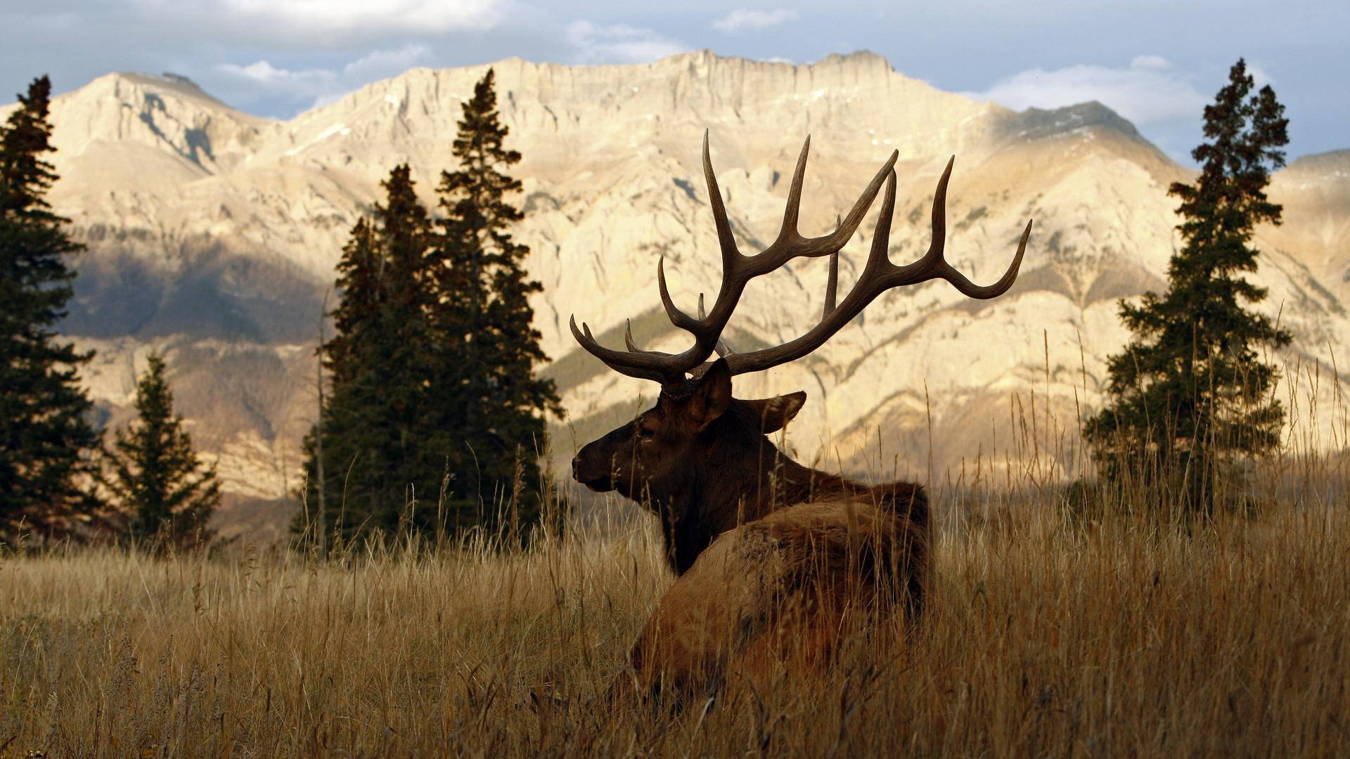 <b>elk Wallpaper</b>, Animals <b>HD Wallpaper</b>,Hi Res Animals <b>Wallpaper</b>,<b>High</b> ...