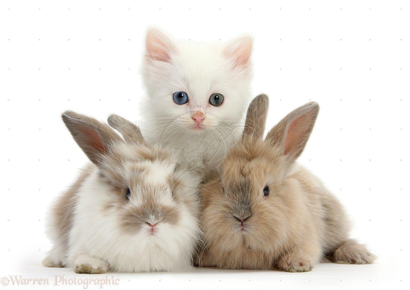 Cute Kitten Desktop Wallpapers - Wallpaper Cave