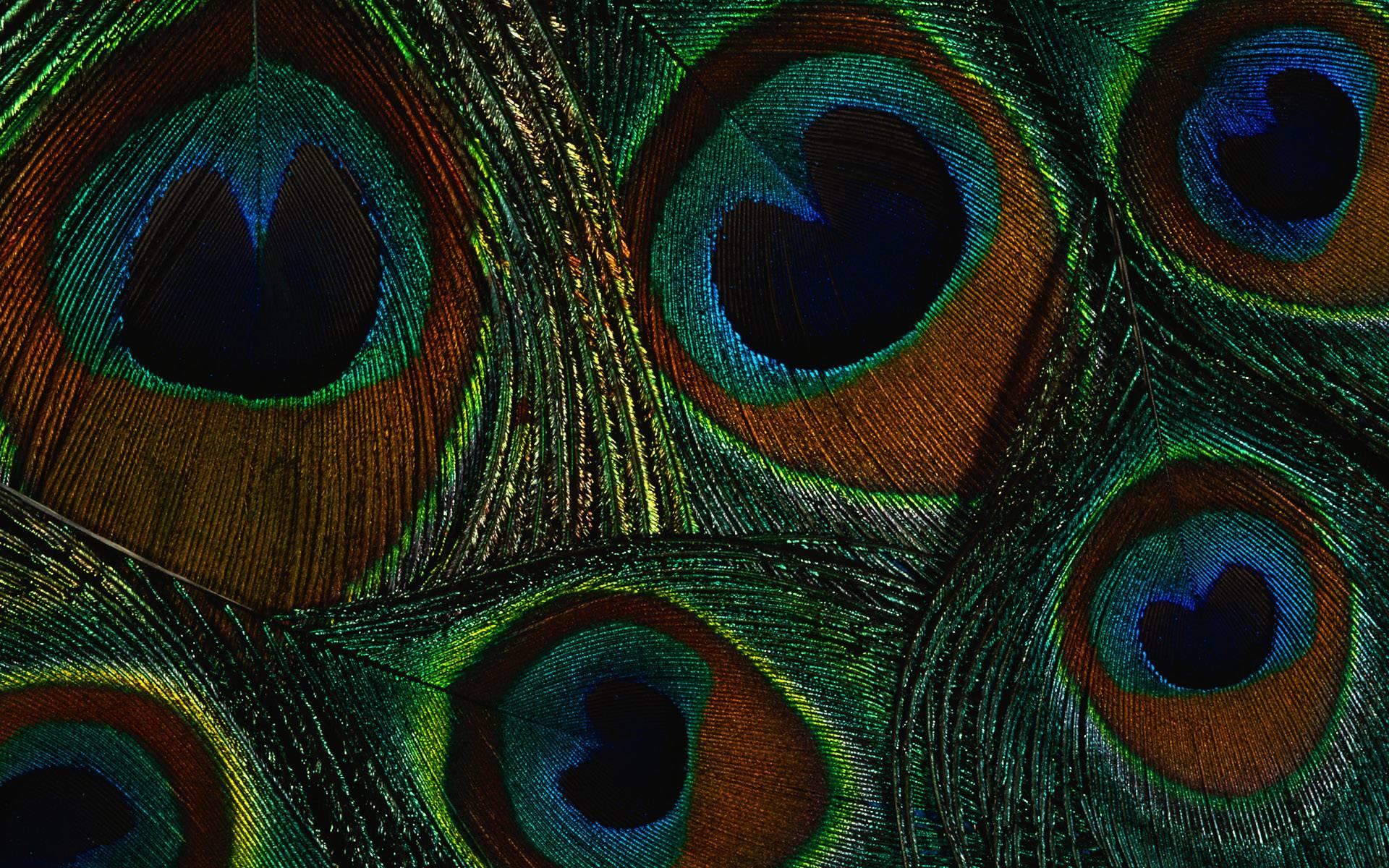 Hd wallpaper unique - Peacock Wallpaper