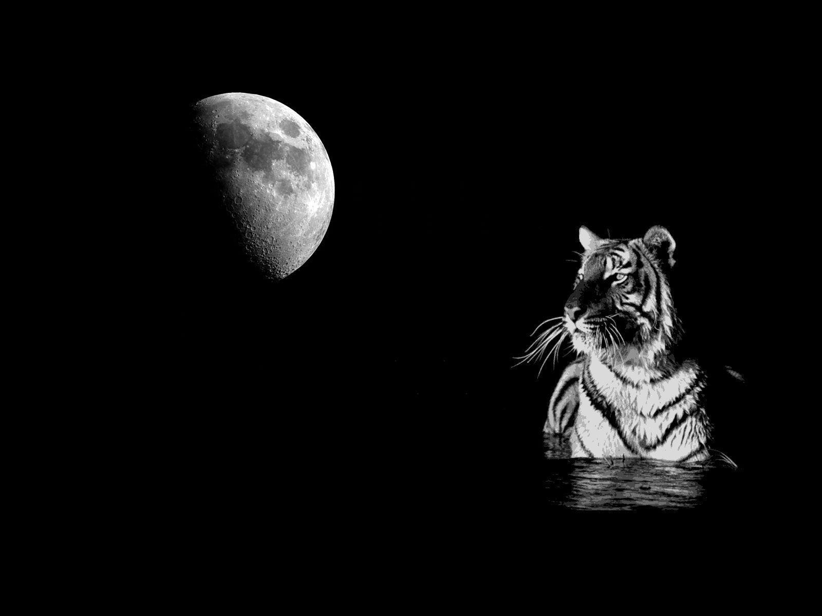 White Tiger Wallpapers for Desktop to Make Our PC Looks Tough and