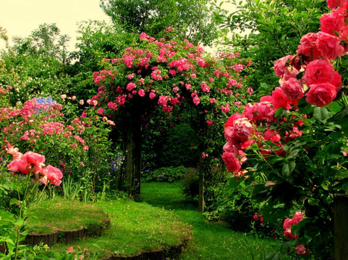 Pink Rose Garden Wallpapers Awesome 7 Design Ideas