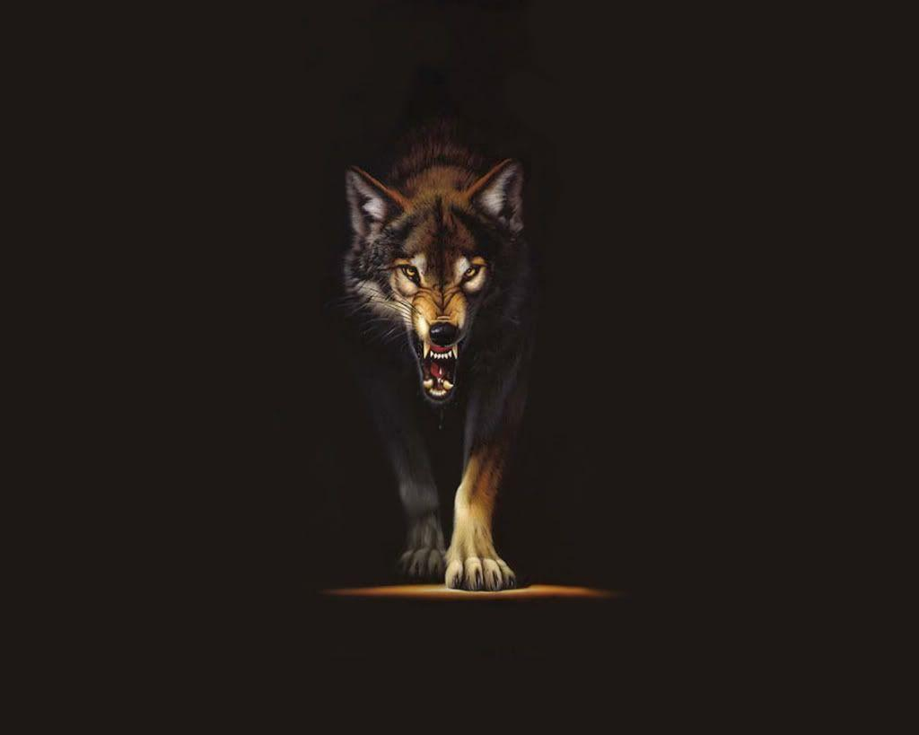 Hd Wolf Backgrounds: Black Wolf Wallpapers