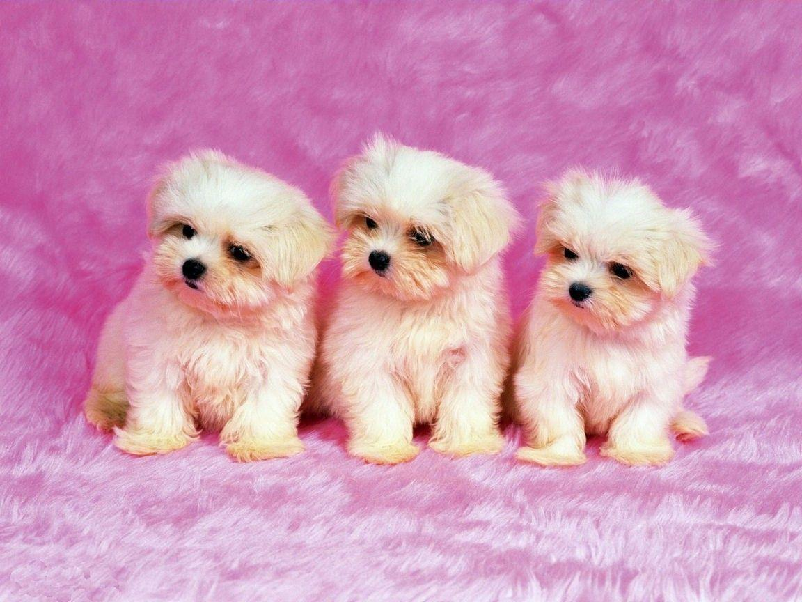 Animals For > Cute Dog Wallpapers Free Download