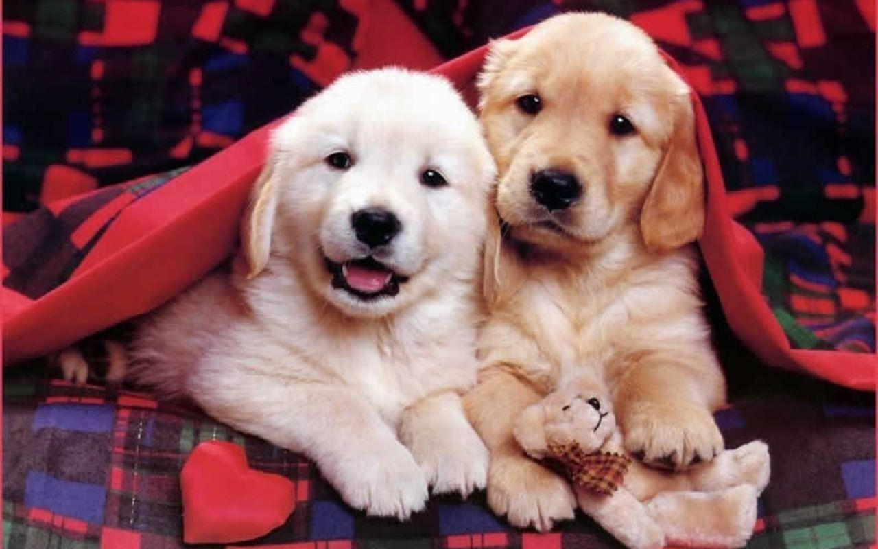 Cute Puppies Wallpapers - Wallpaper Cave