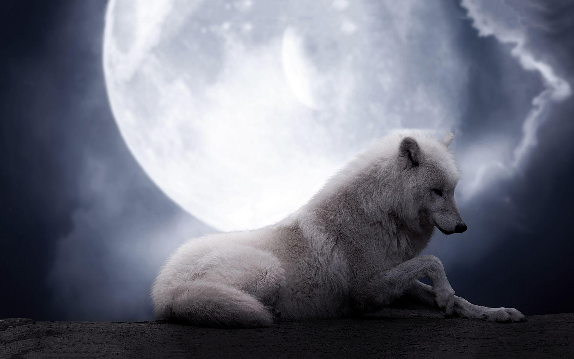 White wolf wallpapers for free hd
