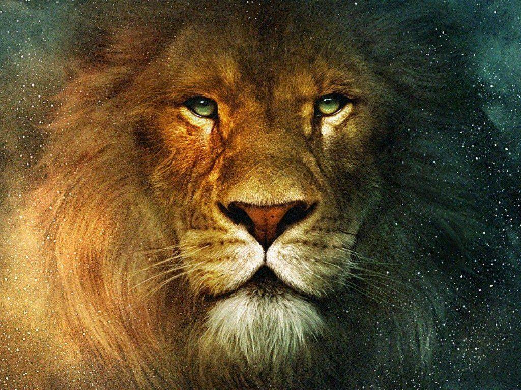 lion-face-wallpaper-hd-3 - Snap lol