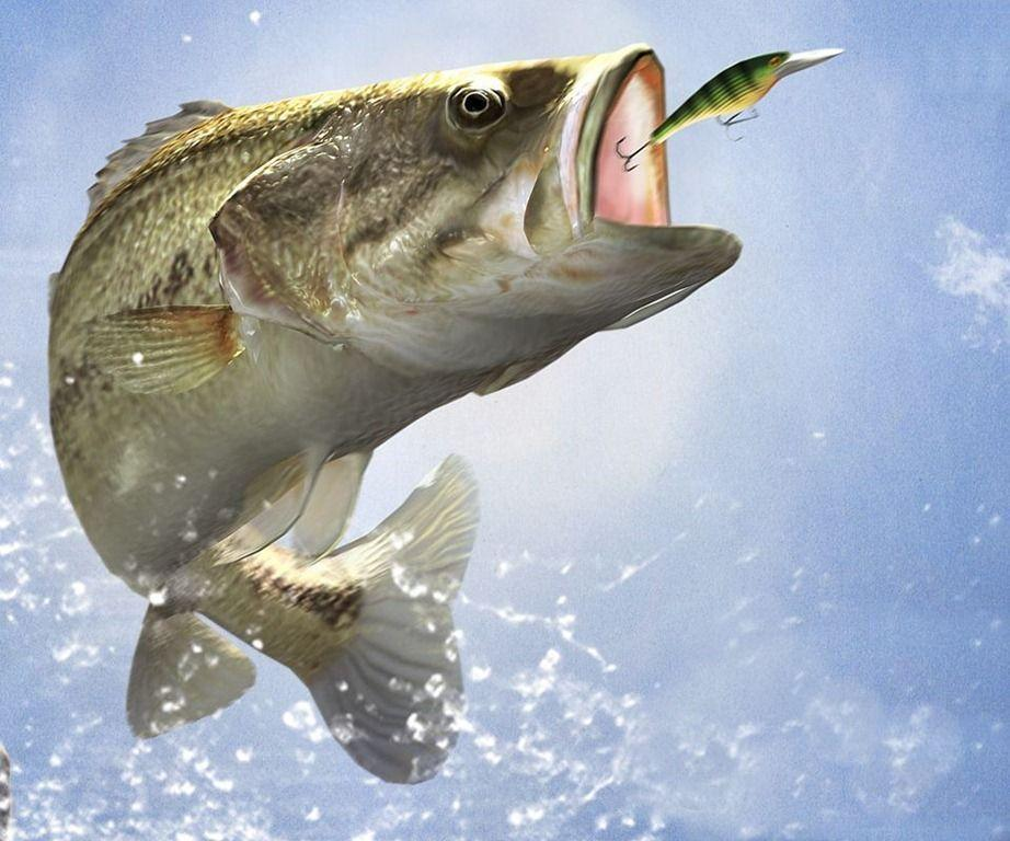 bass fishing pc wallpaper - photo #7