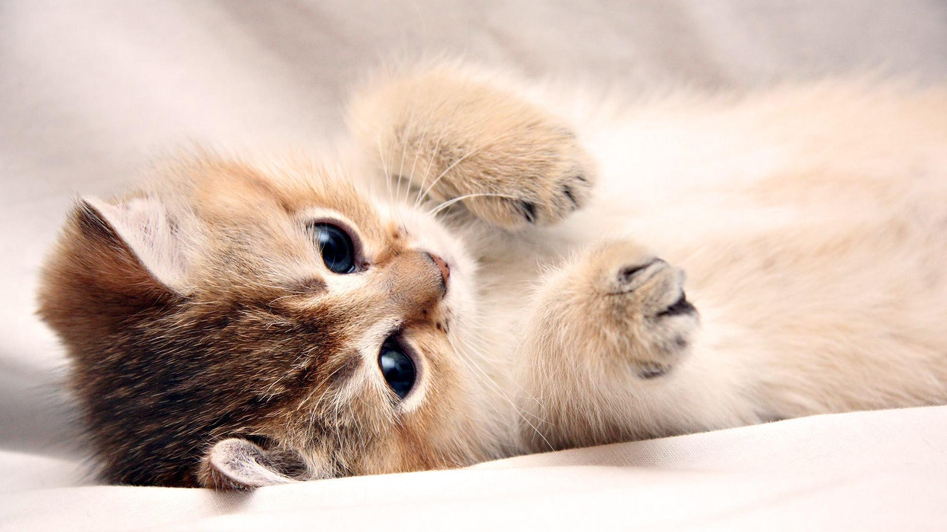Cute wallpapers for laptop wallpaper cave - Cute wallpapers for a laptop ...