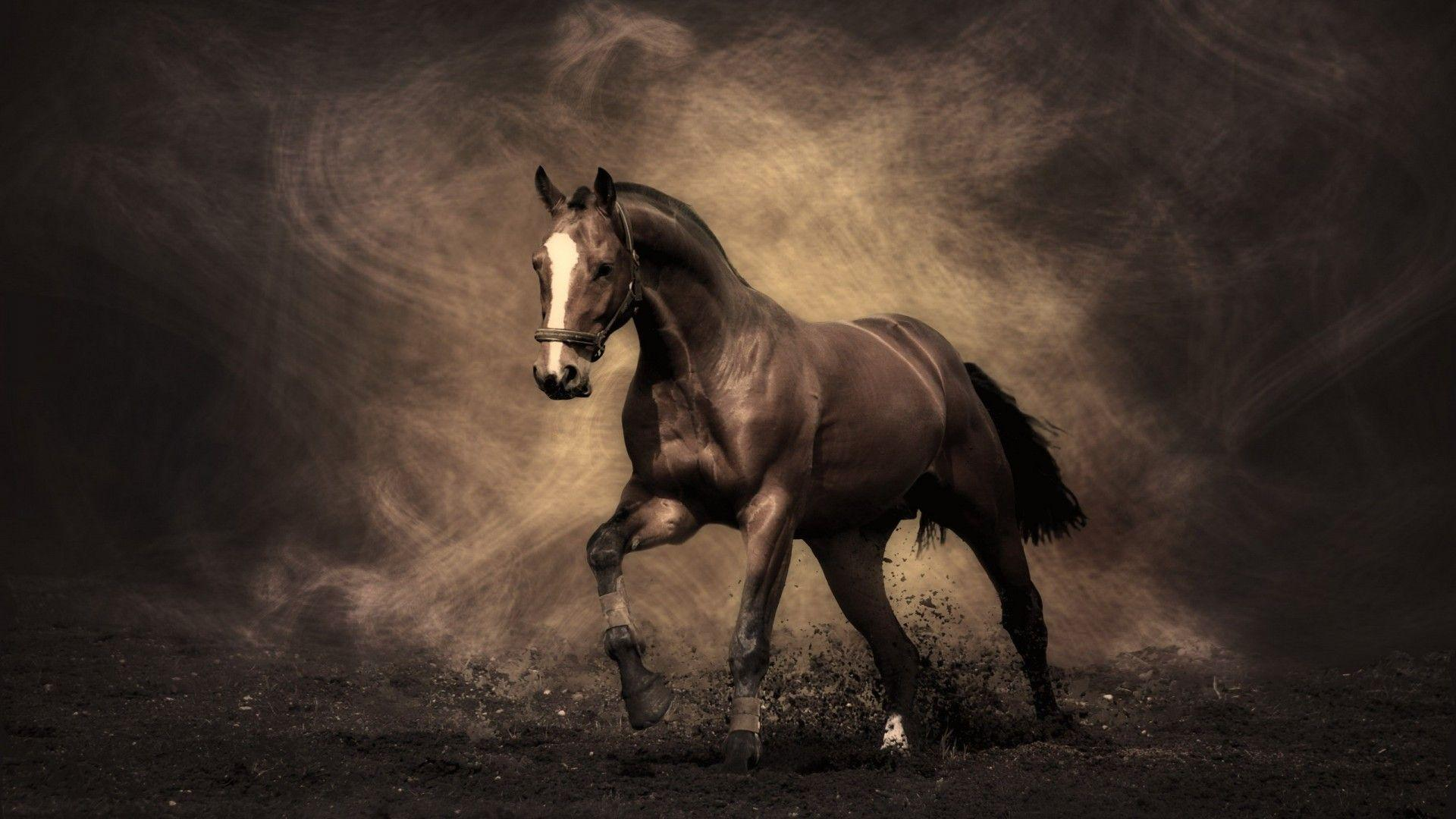 free horse screensavers and - photo #2