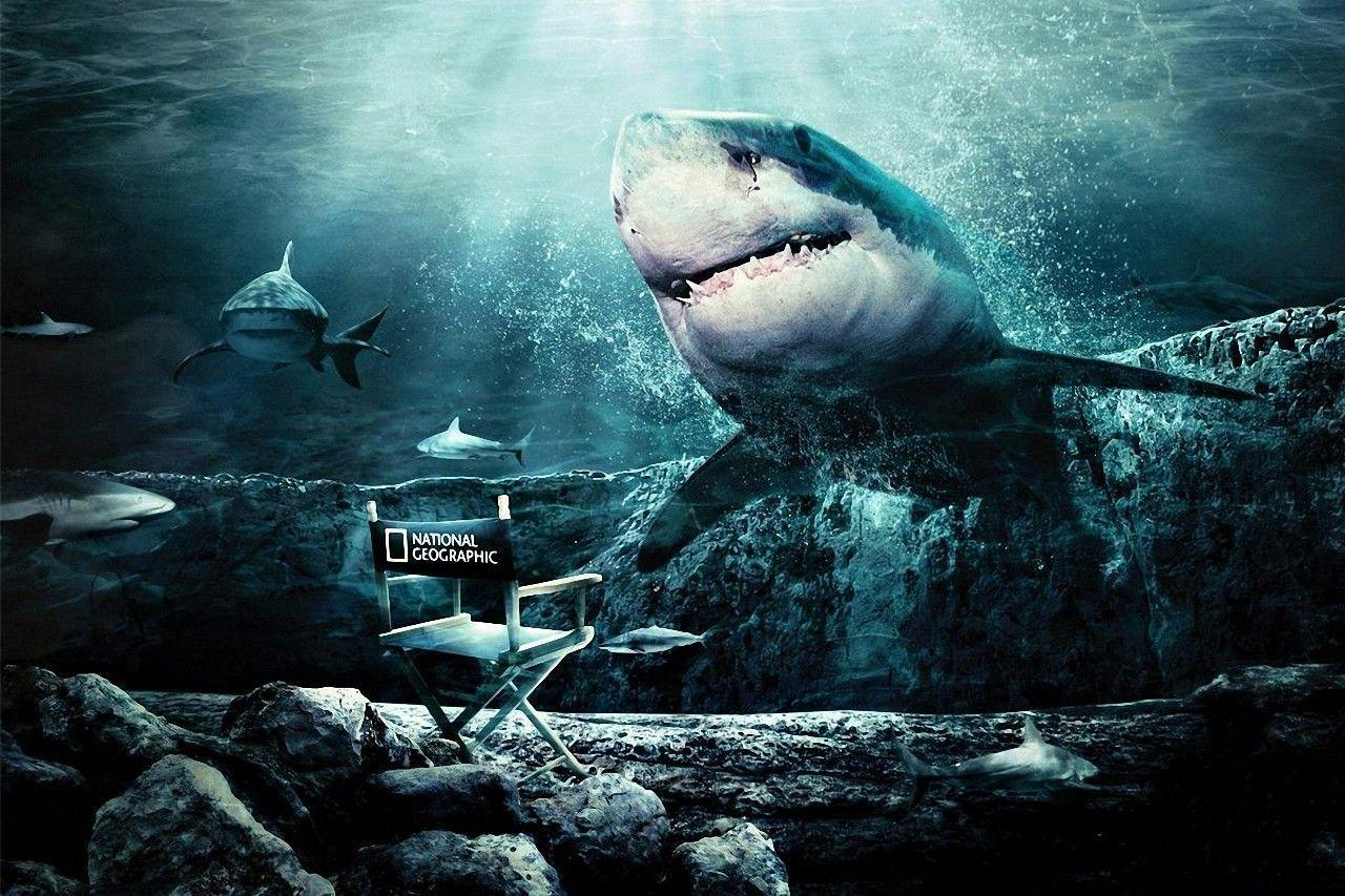 Shark wallpapers wallpaper cave for Cool fishing games