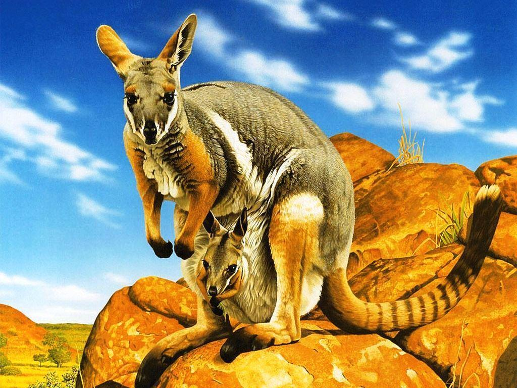 Kangaroo Pics HD (6) - Zem Wallpaper Is The Best Place Where You ...