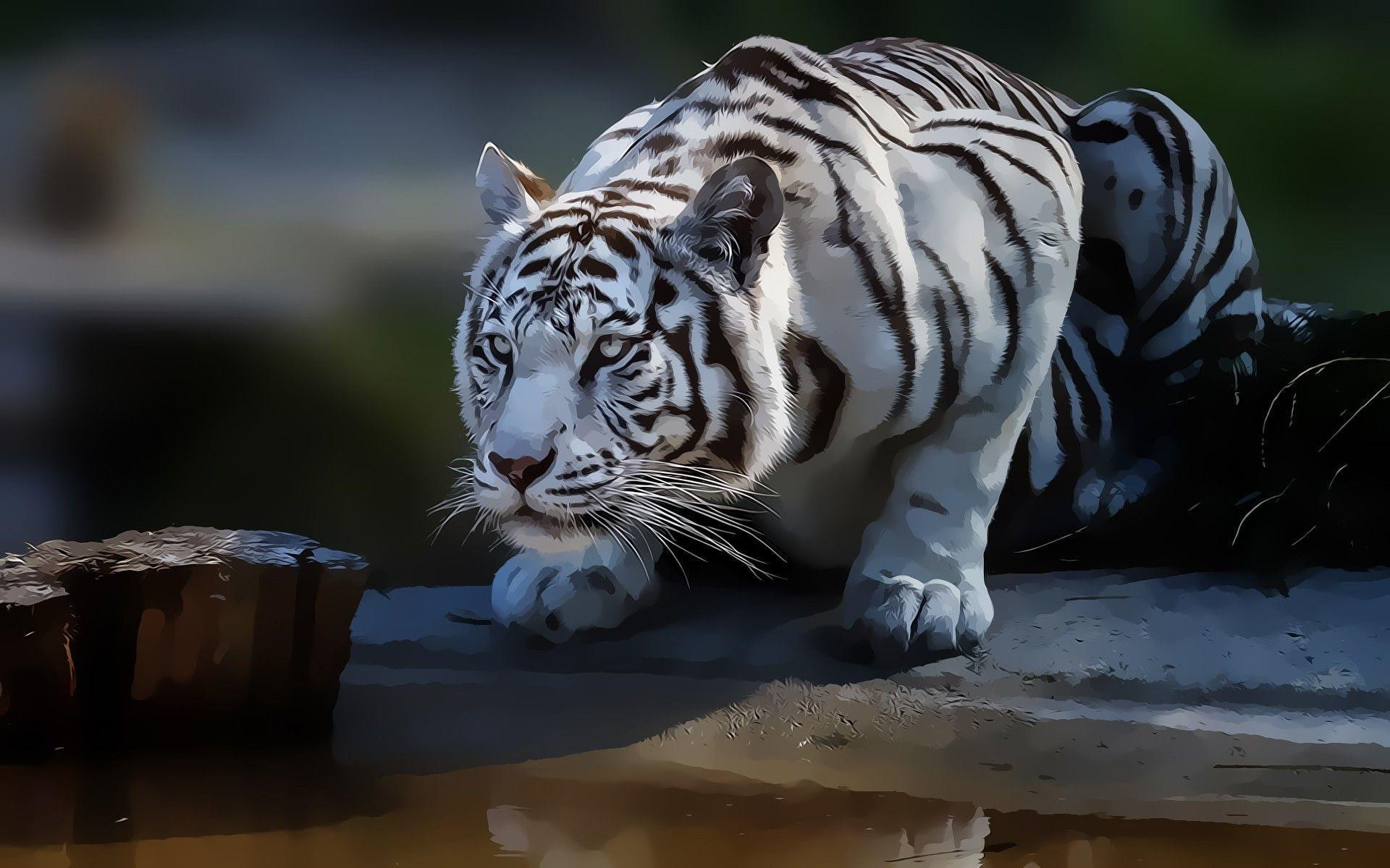 White tiger backgrounds wallpaper cave for White 3d wallpaper