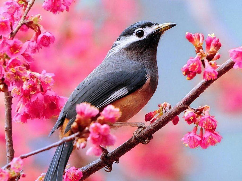 Beautiful Birds Desktop Wallpapers Hongkiat