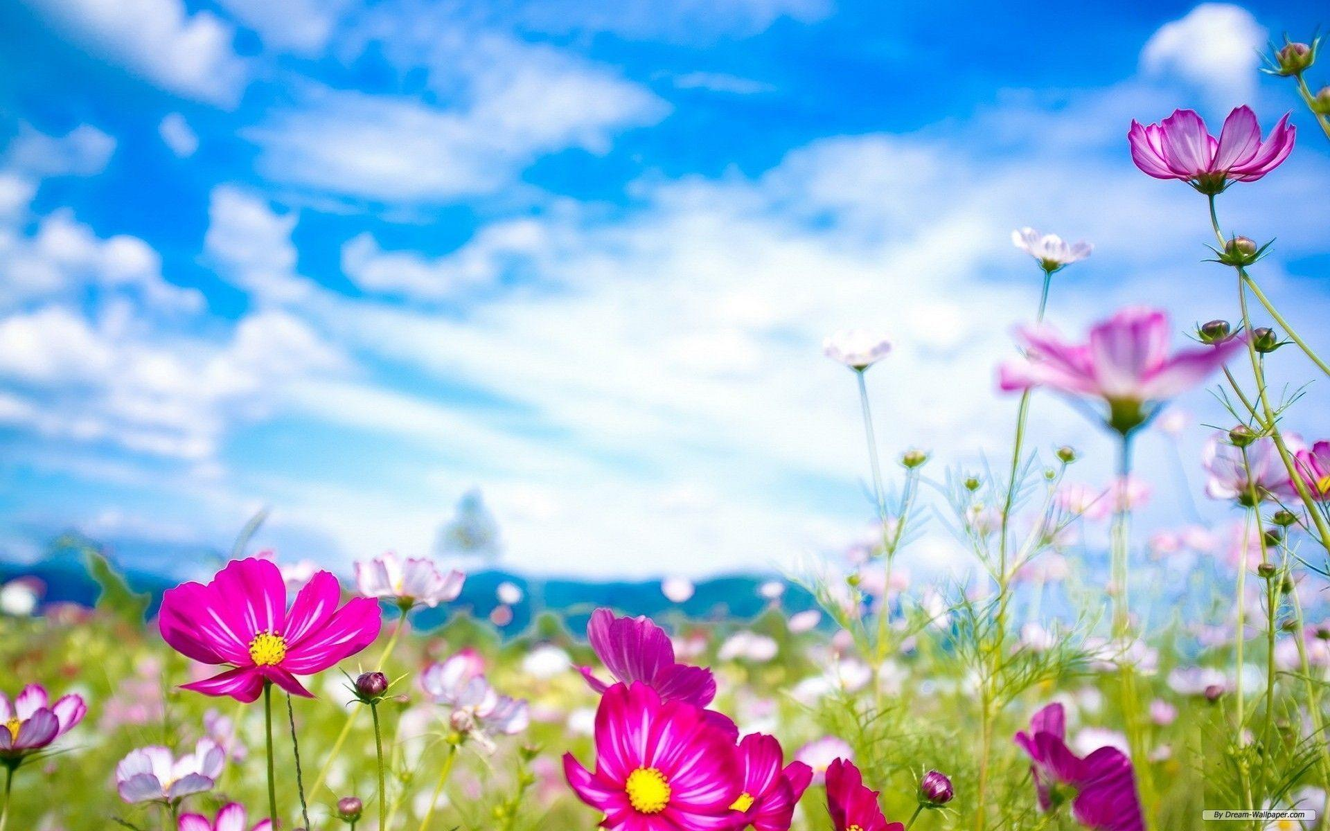 Free wallpapers spring flowers wallpaper cave spring flowers wallpaper free free download wallpaper desktop mightylinksfo